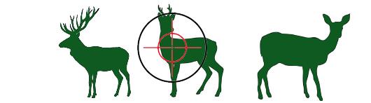 Hier finden Sie Produkte zur Rehbock-Jagd